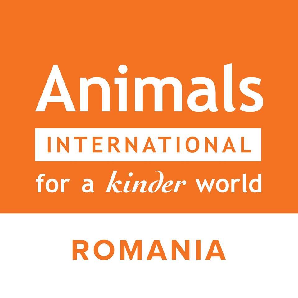 Animals International